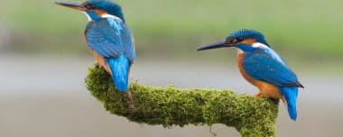 Kingfisher Hide