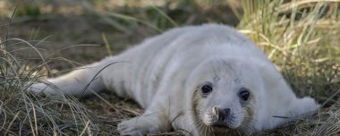 Donna Nook Seal Colony - New Arrivals