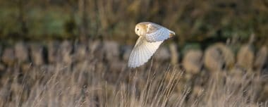 Barn Owl Project
